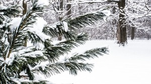 snow-295962_640