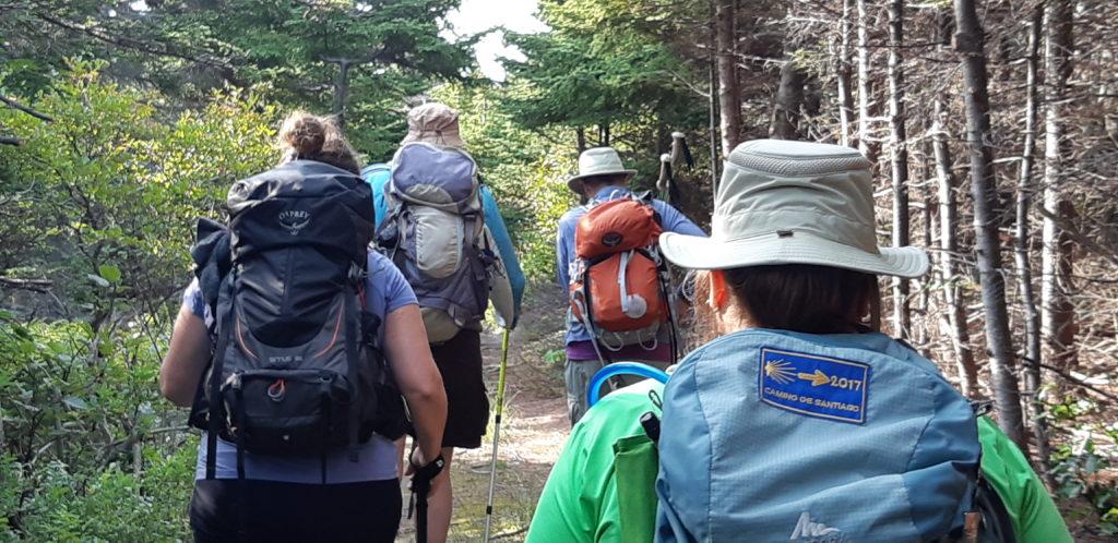 Des marcheurs dans un boisé, en Gaspésie.